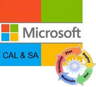 Microsoft Windows Server CAL Sngl LicSAPk OLV NL 1Y AqY1 AP UsrCAL