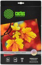 Cactus CS-SGA428020